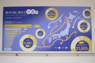 豊洲市場に集まる水産物